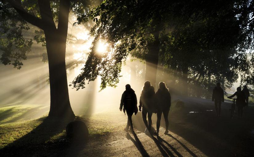 Morning fog at NMBU campus
