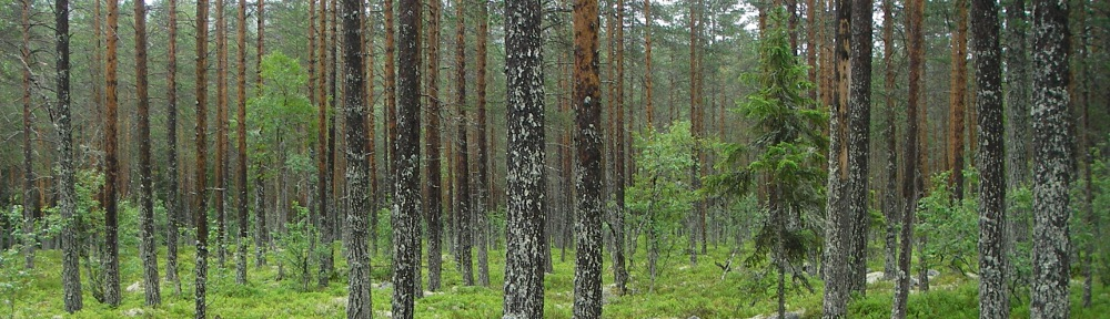 forestinventory.no